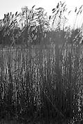 Berlin, GERMANY, General Views, GVs. Berlin Spandau, Park Lake, Frozen Lake,  Monday - 12/01/2009 {Mandatory Credit/Peter Spurrier] Street Photos