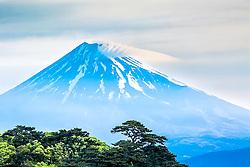 Mt. Fuji, and trees, Heda Port, Izu Peninsula, Japan