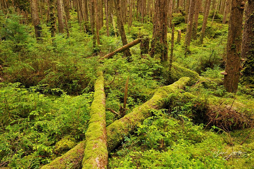 SGang Gwaay Island, UNESCO World Heritage site, Gwaii Haanas National Park- Pacific coast rainforest, Haida Gwaii (Queen Charlotte Islands) , British Columbia, Canada