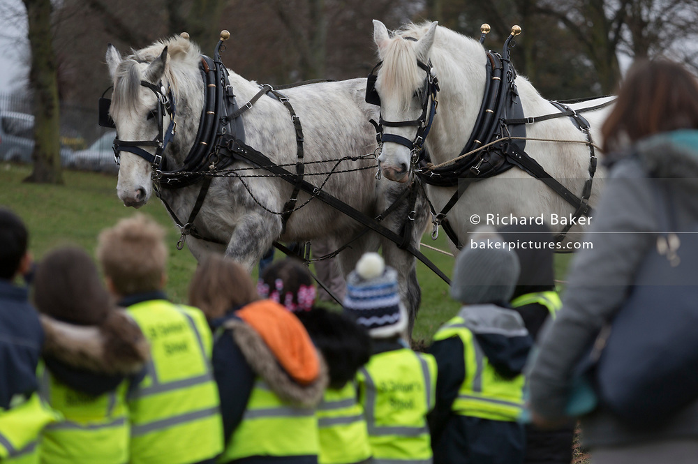 Local schoolchildren watch Irish ploughman Tom Nixon leading Shire horses Nobby and Heath as they plough an on-going heritage wheat-growing area in Ruskin Park, a public green space in the borough of Southwark, on 9th February 2018, in London, England. The Friends of Ruskin Park are again growing heritage wheat and crops together with the Friends of Brixton Windmill and Brockwell Bake Association. Shire horses are descended from the medieval warhorse but are a breed under threat. Operation Centaur, which maintains the last working herd of Shires in London is dedicated to the protection and survival of the breed. It is an organization set up to promote the relevance of the horse as a contemporary working animal in partnership with humans. This takes the form of heritage skills in conservation and agriculture, transportation, discovery, learning and therapy.