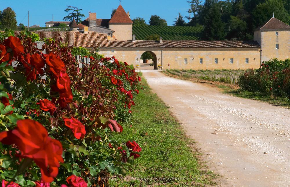 The vineyard and chateau and roses - Chateau Grand Mayne, Saint Emilion, Bordeaux