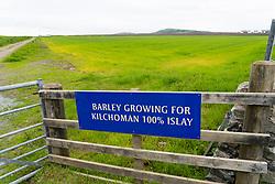 View of field growing barley for Kilchoman Distillery on island of Islay in Inner Hebrides of Scotland, UK