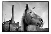 Ghent, Belgium, Jan 15, 2009, Horse at the Port of Ghent. PHOTO © Christophe VANDER EECKEN