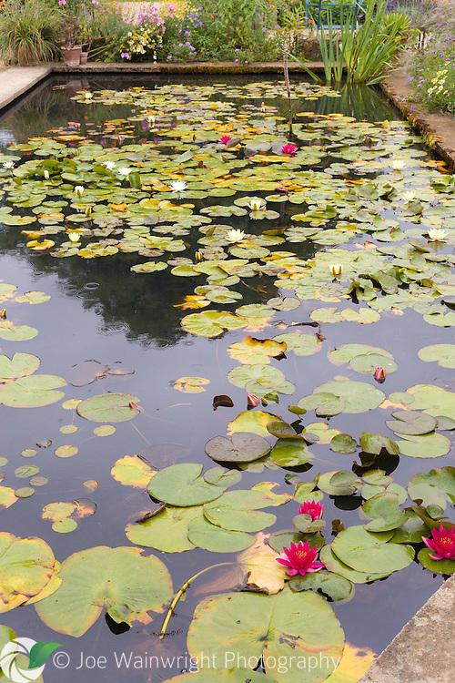 August in Hidcote Manor Garden, Gloucestershire