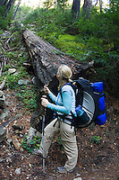 A backpacker stops to check out the tall Redwood on Pine Ridge Trail, Big Sur, California.