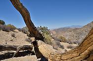 Joshua Tree National Park desert scene near Keys View, Joshua Tree, San Bernadino County, California.