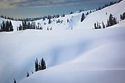 Snow and trees along Mazama Ridge at Mount Rainier in the winter