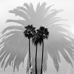 Abstract Palm Trees (Series)