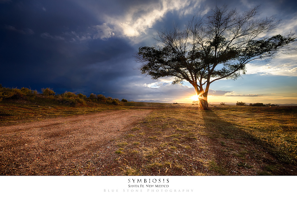 20x30 poster print of tree silhouetted against a southwest sunset and summer monsoon storm. (Editor's Choice - PhotoExtract: September 6, 2013)