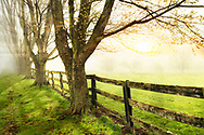 A line of trees and wooden fence bordering a pasture on a foggy morning, Southwestern Ohio, USA