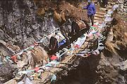 Yaks crossing suspension bridge