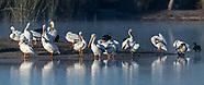 San Joaquin Wildlife