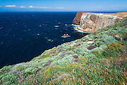 Cavern Point, Santa Cruz Island, Channel Islands National Park, California USA