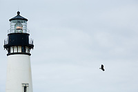 Views of and from the Yaquina Lighthouse north of Newport, Oregon