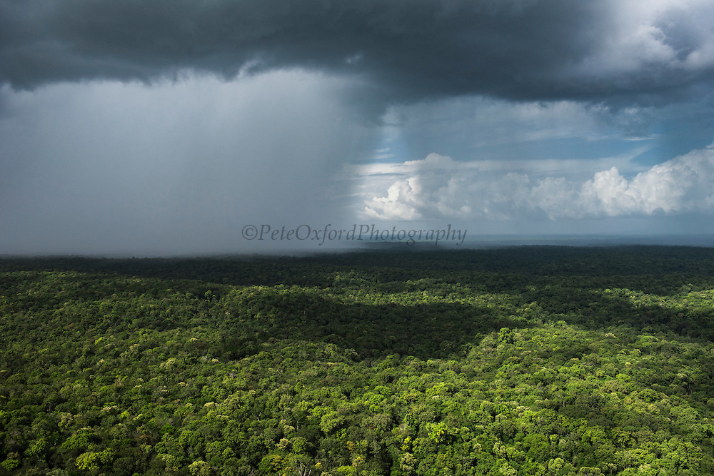 Rain in forest<br /> Potaro-Siparuni Region<br /> Brazil Guyana border<br /> GUYANA<br /> South America
