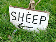 Sign pointing to the sheep pen at Farndale Show on 28th August 2017 in North Yorkshire, United Kingdom. Farndale Show is a small traditional agricultural show in the heart of the North York Moors