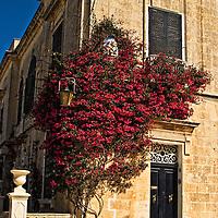 Bouganvilla on building in Malta.