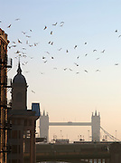 Birds fly above the River Thames, with view to Tower Bridge in London, UK