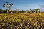 Savanna <br /> Rupununi<br /> GUYANA<br /> South America