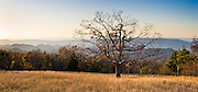 Sunset rays highlight a lone tree in the Blue Ridge Mountains along Skyline Drive, a National Scenic Byway which runs 105 miles (169 km) along the ridge of long and narrow Shenandoah National Park, in Virginia, USA. To the west is the broad Shenandoah Valley. The south end of Skyline Drive connects with the Blue Ridge Parkway, a 469-mile (755 km) long scenic highway that ends in North Carolina at the east entrance of Great Smoky Mountains National Park (which spans into Tennessee). The Blue Ridge Mountains are a physiographic province of the larger Appalachians (see map). Trees release a haze of hydrocarbon gases which selectively backscatter blue light, the name source for the Blue Ridge Mountains. Shenandoah NP was authorized in 1926 and fully established on December 26, 1935. Almost 40% of its land has been designated as Wilderness, protected as part of the National Wilderness Preservation System. Panorama stitched from 3 overlapping photos.