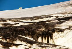 Polar bear (Ursus maritimus) on glacier, in Hinlopen, Spitsbergen, Svalbard, Norway
