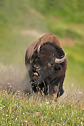 Images from Custom Yellowstone Tour photo tours
