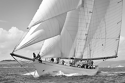 Altair 1931 Schooner...Mixed and bright conditions for the fleet as they race from Kames to Largs...* The Fife Yachts are one of the world's most prestigious group of Classic .yachts and this will be the third private regatta following the success of the 98, .and 03 events.  .A pilgrimage to their birthplace of these historic yachts, the 'Stradivarius' of .sail, from Scotland's pre-eminent yacht designer and builder, William Fife III, .on the Clyde 20th -27th June.   . ..More information is available on the website: www.fiferegatta.com . .Press office contact: 01475 689100         Lynda Melvin or Paul Jeffes