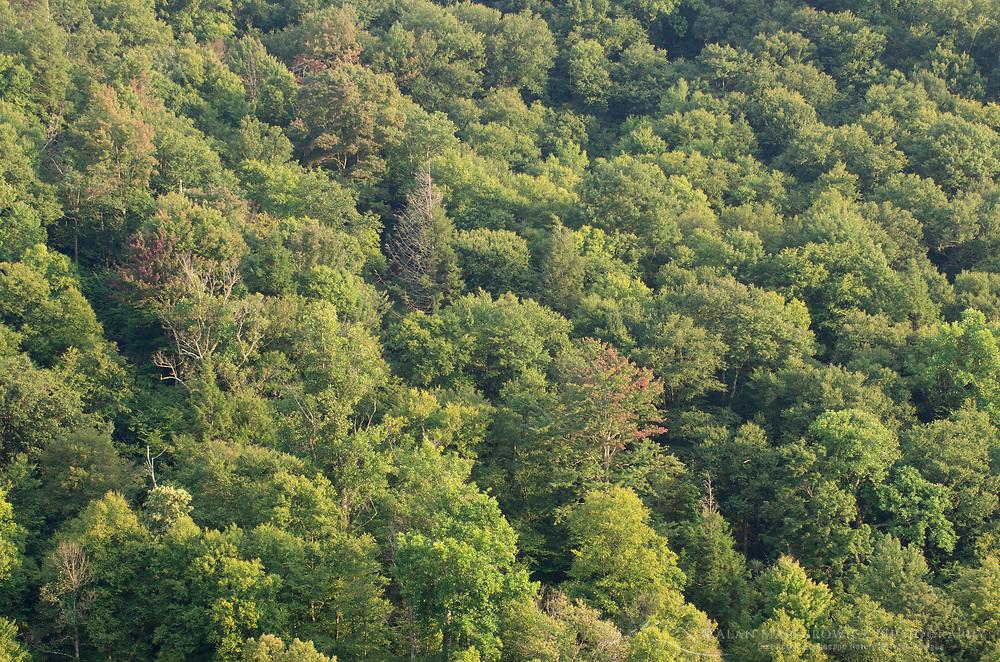 Appalachian Mountains deciduous forest, Blackwater falls State Park West Virgina