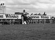 Irish Grand National At Fairyhouse.  (R54)..1987..20.04.1987..04.20.1987..20th April 1987..The Easter Racing Festival at Fairyhouse included the running of the Jameson sponsored Irish Grand National. Another featured race was the Jameson Gold Cup which was also run on Easter Monday...Image shows 'Wolf of Badenoch' romping home to win the Jameson Gold Cup at Fairyhouse, Ratoath, Co Meath.The horse is ridden by Mr B Sheridan and is owned by Mr W H O'Gorman, Jameson's, Irish, Whiskey, jameson,