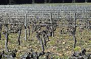 vineyard chateau de campuget rhone france