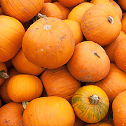 Box of pumpkins at a farm stand in Massachusetts
