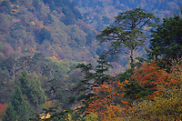 Fall colours in the humid montane mixed forest, Laba He National Nature Reserve, Sichuan, China