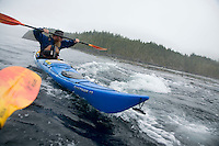 Kayaker with adult Humpback Whale swimming right underneath his kayak near Johnstone Straight, British Columbia, Canada.