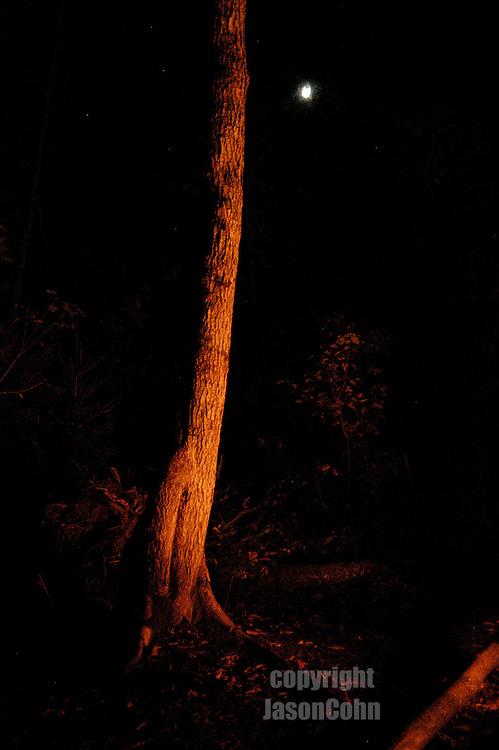 A campfire illuminates a tree in the Adirondacks in the Fall. Photo by Jason Cohn