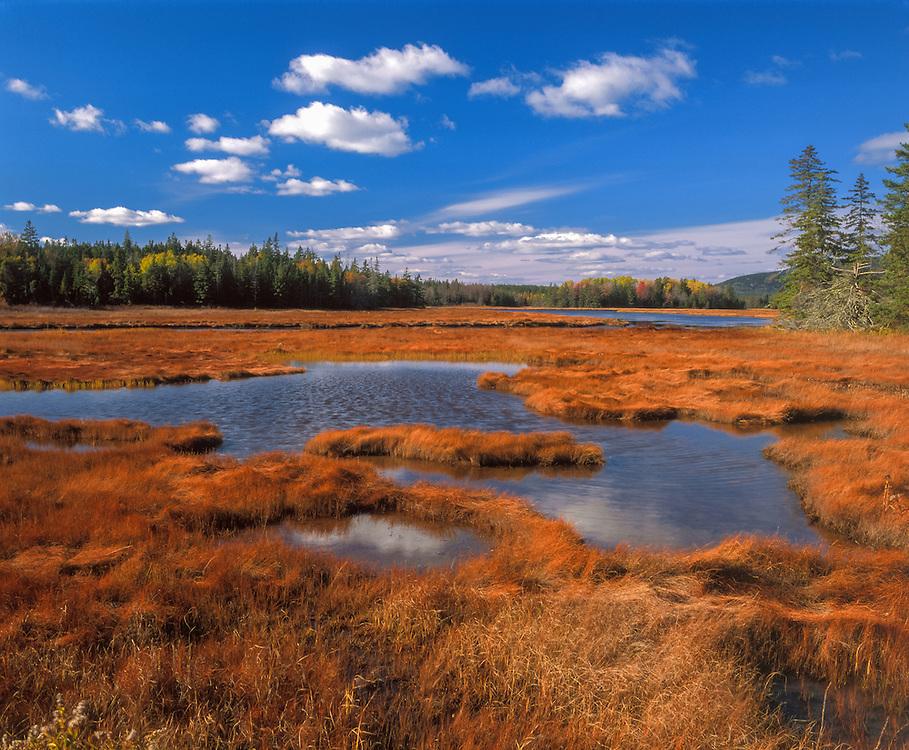 Bass Harbor Marsh, fall grasses, brook, wetlands, spruce trees at far edge, Acadia National Park, ME