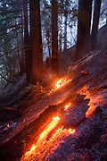 The Meyers Fire burns in a redwood grove along California's Highway One in Sonoma County after being closed for a week due to a natural caused lightning fire that burned from Meyers Grade down to the Pacific Ocean North of Jenner.