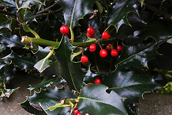Winter is coming to Edinburgh as the leaves turn and thoughts turn to hot chocolate and warm fires as you write your Christmas cards<br /> <br /> (c) Ger Harley |  Edinburgh Elite media
