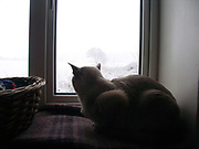 A1FNEF Cat looking through the window at snow