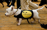Dogs Trust. The Lord Mayor's Show, London, UK (12 November 2011)