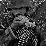 Jul 12, 2008 - Zhari District, Kandahar Province, Afghanistan - An Afghan soldier eats grapes during a patrol in Pashmul in Zhari District, Kandahar Province, Afghanistan..(Credit Image: © Louie Palu/ZUMA Press)
