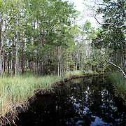 Ochlockonee River State Park along the Big Bend Scenic Highway in the Apalachicola National Forest in Florida. (AP Photo/Alex Menendez) Florida scenic highway photos from the State of Florida. Florida scenic images of the Sunshine State.