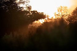 UK ENGLAND WILTSHIRE 26JUN08 - Early morning light near the river Kennet in rural Wiltshire, western England...jre/Photo by Jiri Rezac..© Jiri Rezac 2008..Contact: +44 (0) 7050 110 417.Mobile:  +44 (0) 7801 337 683.Office:  +44 (0) 20 8968 9635..Email:   jiri@jirirezac.com.Web:     www.jirirezac.com..© All images Jiri Rezac 2008 - All rights reserved.