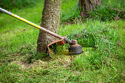 Using a strimmer plate to protect trunk whilst strimming long grass around the base of a tree