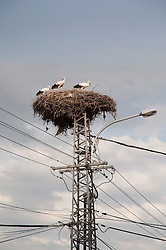 Stork nest on electric power pole, Hungary
