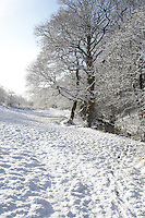 snow covered woodland valley with leafless trees