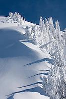 Snow encased trees on Kulshan Ridge Heather Meadows Recreation Area, North Cascades Washington USA