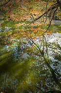 The autumn sunlight glows through the foliage and lights the surface of a small, hidden pond in the Cape Cod National Seashore.