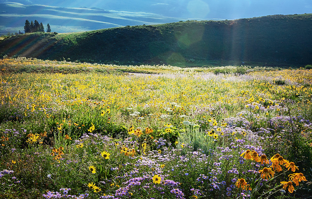 A field of wildflowers near Crested Butte in an area reminiscent of Tuscany.