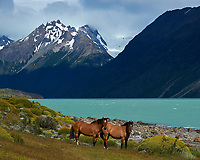 Horses at Estancia Helsingfors in Patagonia. Image taken with a Nikon D3s camera and 24-120 mm f/4  lens (ISO 200, 85 mm, f/8, 1/1000 sec)