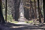 Nederland, Ubbergen, 22-3-2020Lentedag in het bos tussen Berg en Dal en Ubbergen. FOTO: FLIP FRANSSEN